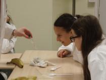 Observation de filaments d'ADN extraits de la purée de banane